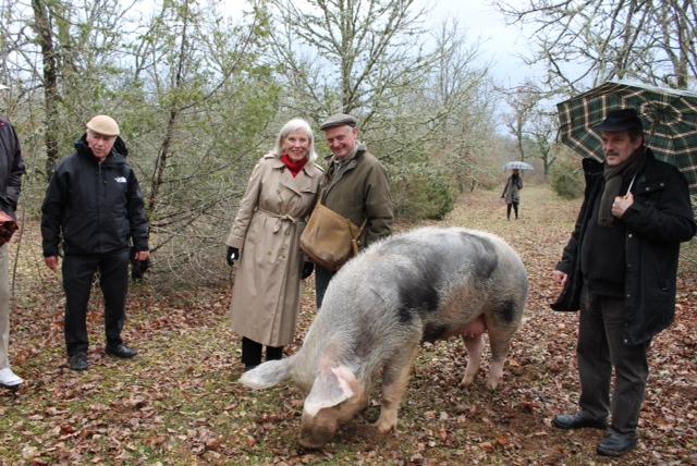 Truffle-hunting-pig.jpg